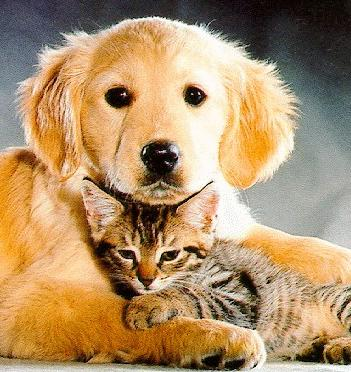 pictures of puppies and kittens together. Pics Of Puppies And Kittens Together. The